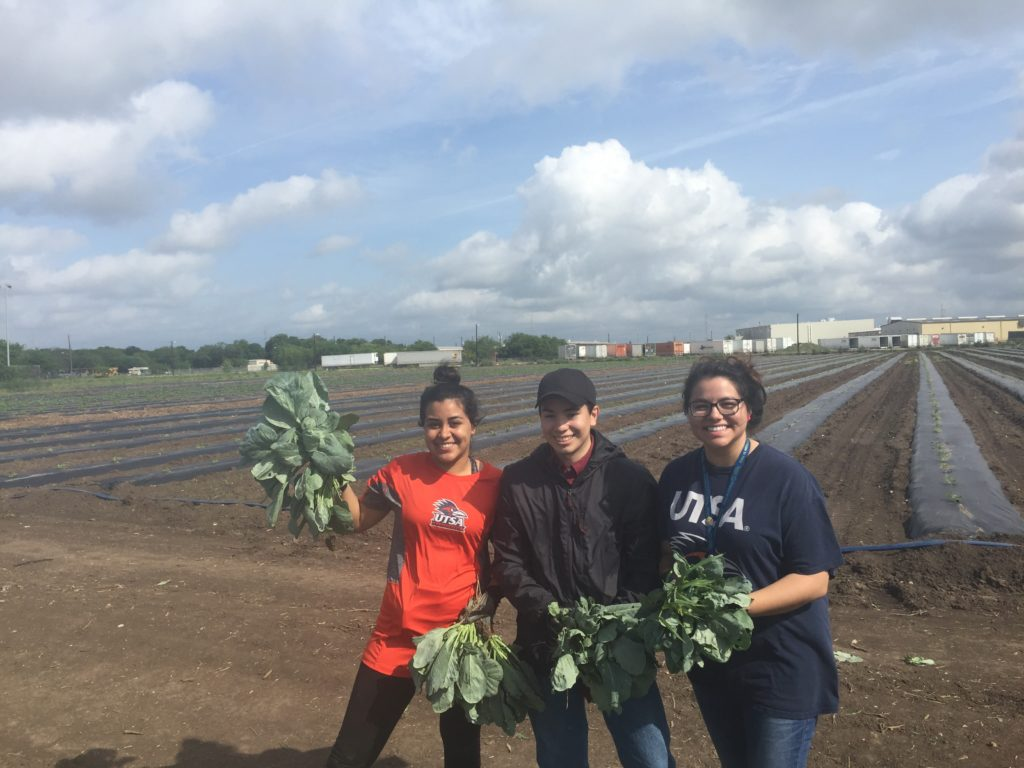 students volunteer at community garden